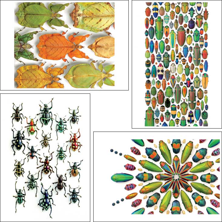 Beetle cards