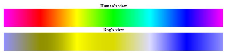 dogs humans color